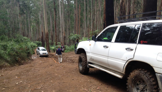 Bunyip State Forest